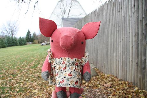 wool pig